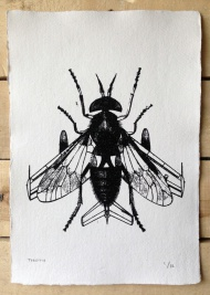 'Fear of Flying' New prints from Thoth available here at just £20 each.